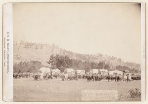 buffallo-bison-wagon-old-native-american
